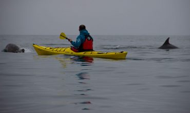 Sea kayaking with Bottlenose Dolphins
