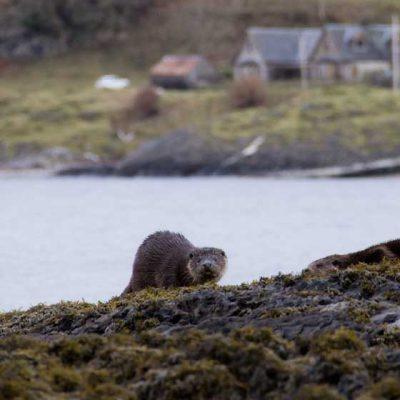 Otter Loch on Linnhe