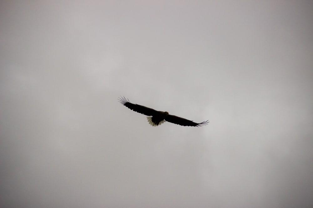 sea eagle ardtoe 11
