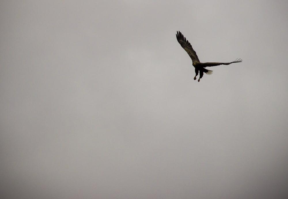 sea eagle ardtoe 4 b
