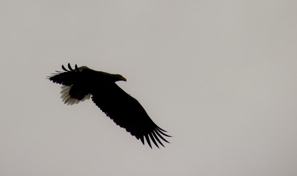 sea eagle ardtoe 6 b
