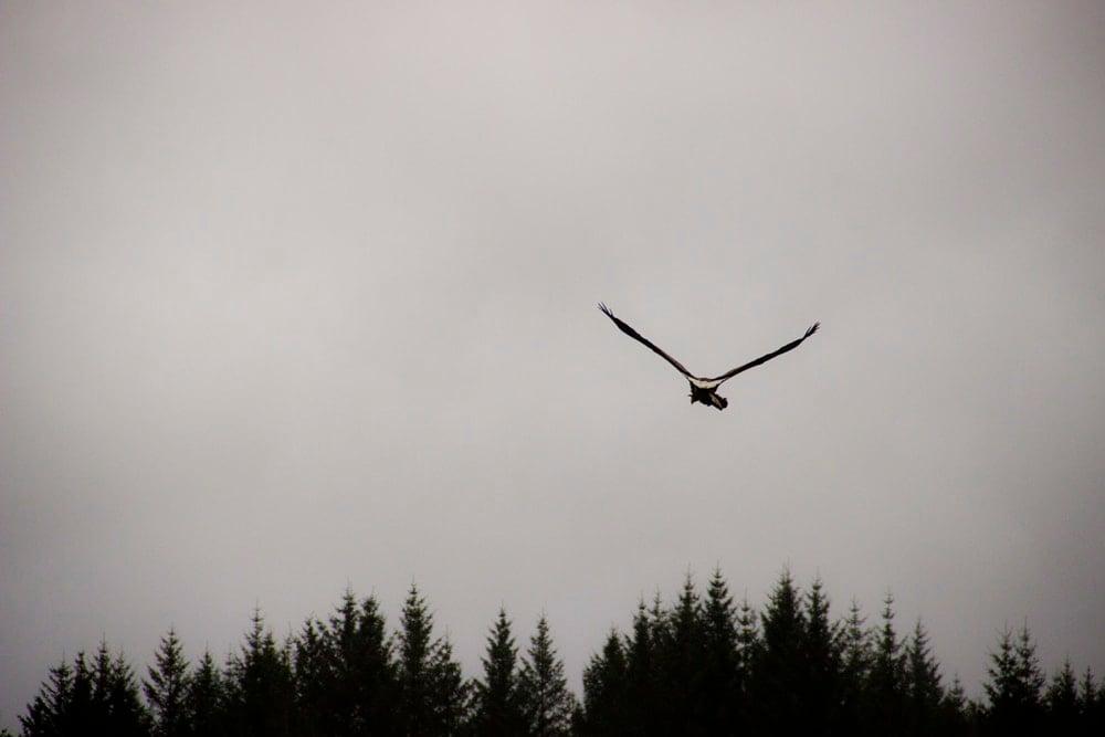 sea eagle ardtoe 7