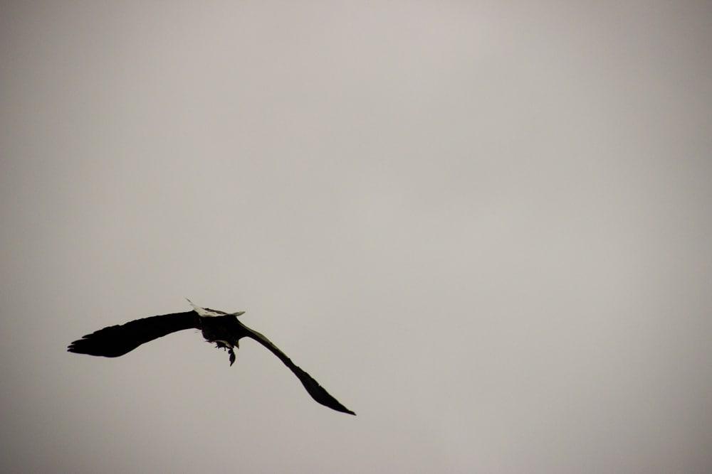 sea eagle ardtoe 8