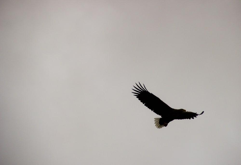 sea eagle ardtoe 9