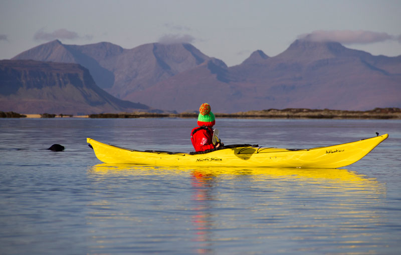 Common seals swimming behind a sea kayaker in Arisaig.
