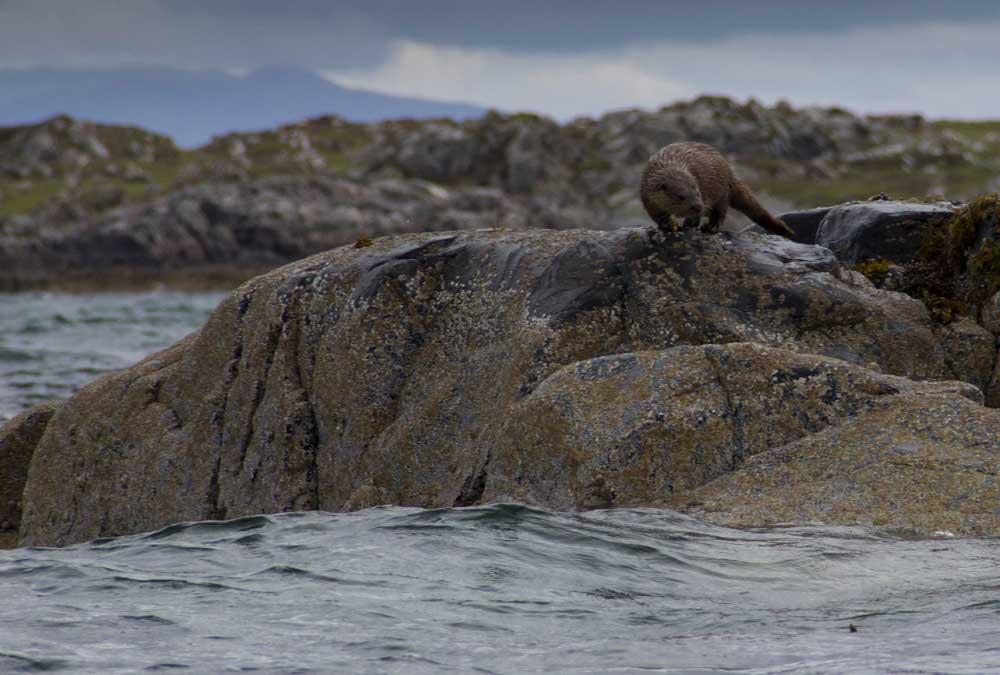 Otter-8